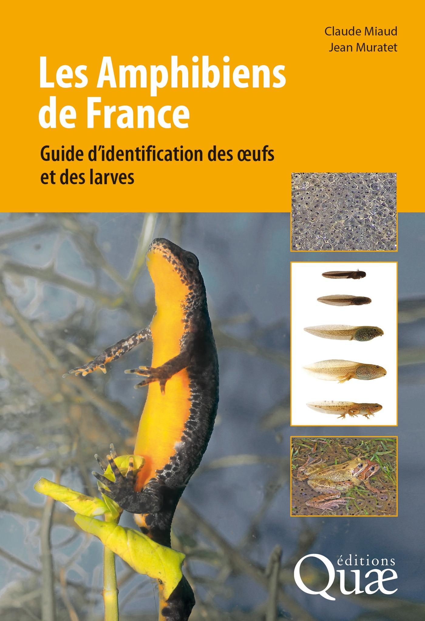 Les Amphibiens de France