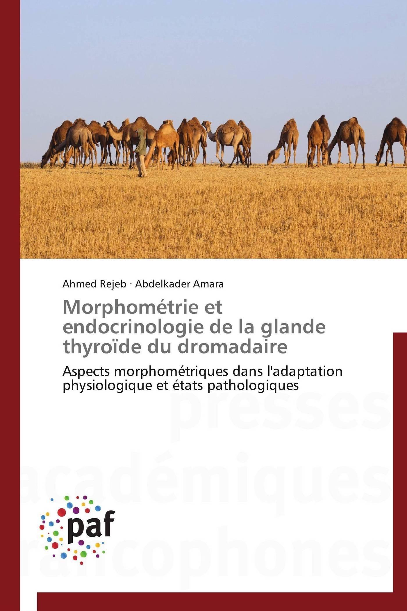 MORPHOMETRIE ET ENDOCRINOLOGIE DE LA GLANDE THYROIDE DU DROMADAIRE