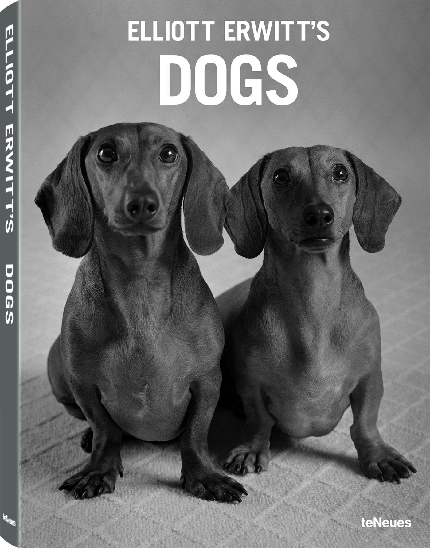 DOGS EDITION DE POCHE