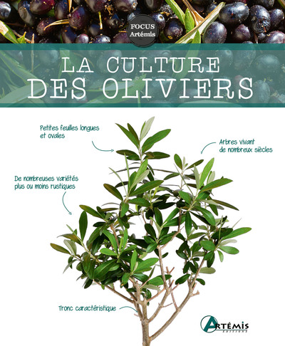 CULTURE DES OLIVIERS