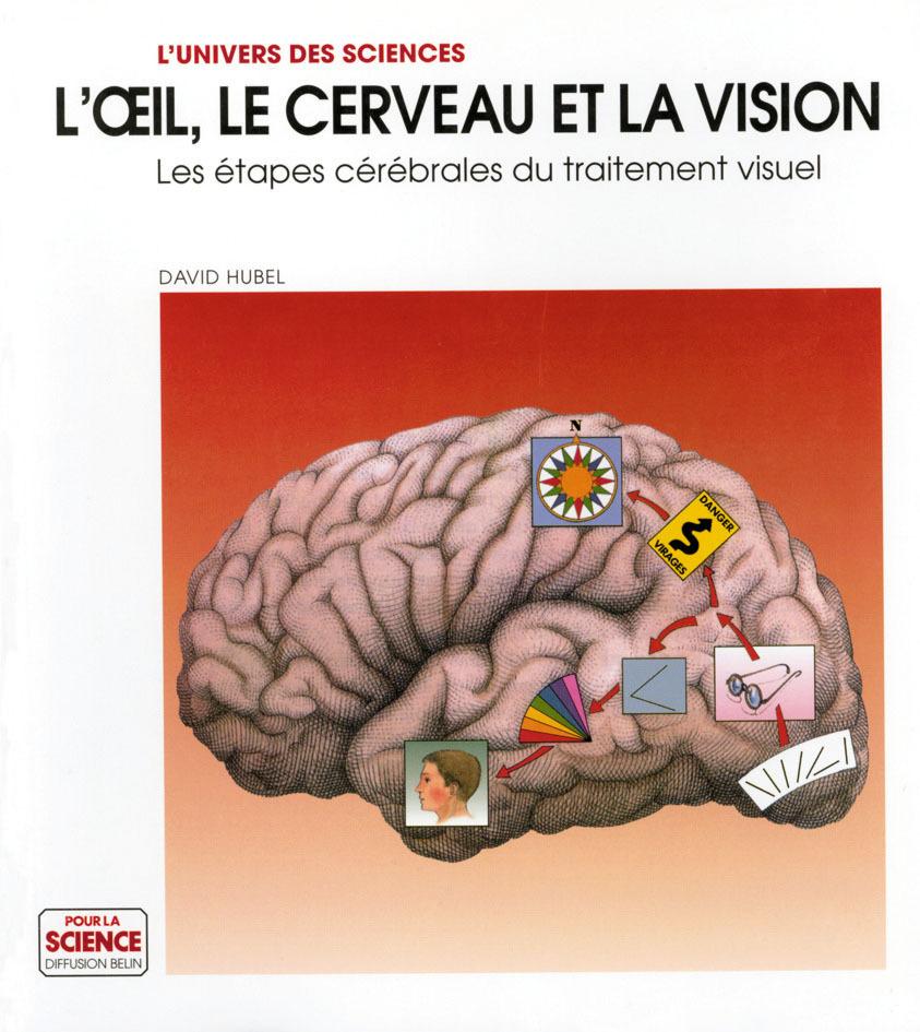 L'OEIL LE CERVEAU.
